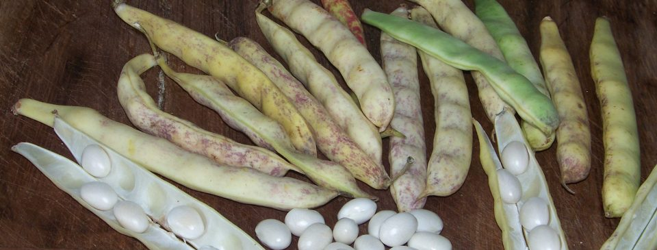 coco paimpol